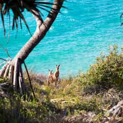 North Stradbroke Island comes alive with colour and creativity for the Minjerribah Arts Trail